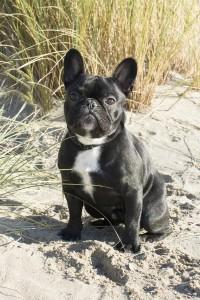 huidieren-hond-duinen