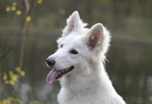 portret-hond-buiten