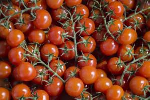tomaten-veiling-tuinder